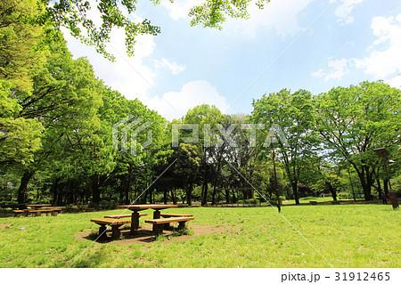 和田堀公園の新緑 31912465