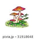キノコ 毒キノコ 手描きのイラスト 31918648