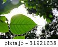 グリーン 緑 緑色の写真 31921638