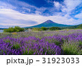 【山梨県】ラベンダーの花畑・富士山 31923033
