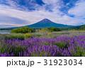 【山梨県】ラベンダーの花畑・富士山 31923034