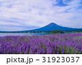 【山梨県】ラベンダーの花畑・富士山 31923037
