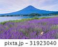 【山梨県】ラベンダーの花畑に犬・富士山 31923040