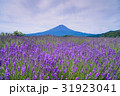 【山梨県】ラベンダーの花畑・富士山 31923041
