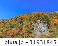石川_白山林道の紅葉 31931845