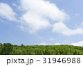 森林 森 青空の写真 31946988