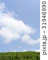 森林 森 青空の写真 31946990