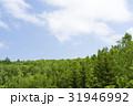 森林 森 青空の写真 31946992