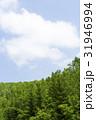 森林 森 青空の写真 31946994
