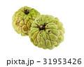 農業 りんご アップルの写真 31953426
