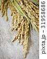 稲穂 稲 穀物の写真 31958686