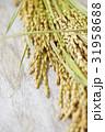 稲穂 稲 穀物の写真 31958688