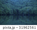 蔦沼 自然 森の写真 31962561