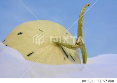 白縞系ノーネットメロン、しらかばグリーン、青空 31975080
