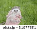 動物 起きる 起床の写真 31977651