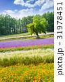花 フィールド 田畑の写真 31978451