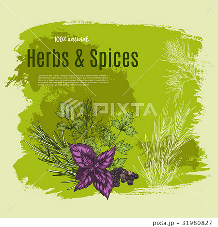 Vector natural spices and herbs poster for shopのイラスト素材 [31980827] - PIXTA