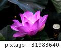 花 フラワー お花の写真 31983640