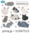 チンチラ アイコン ペットのイラスト 31987315