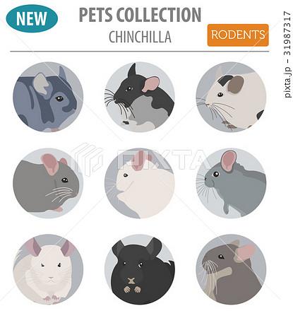 Chinchilla breeds icon set flat style isolated 31987317