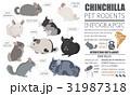 チンチラ アイコン ペットのイラスト 31987318