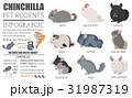 チンチラ アイコン ペットのイラスト 31987319