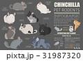 チンチラ アイコン ペットのイラスト 31987320