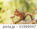 自然 動物 赤の写真 31989047
