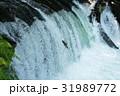 さくらの滝 滝 サクラマスの写真 31989772