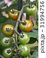 トマト ミニトマト クローズアップの写真 31994756