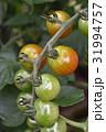 トマト ミニトマト クローズアップの写真 31994757