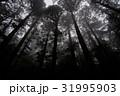 屋久島 31995903