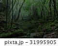 屋久島 31995905