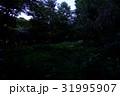 初夏の蛍 31995907
