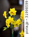 黄色いスイセンの花 31998599