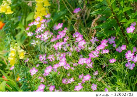 春をよろこぶ花々 32002702
