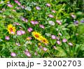 春を喜ぶ花々2 32002703