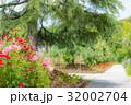 花に見守られる散歩道 32002704