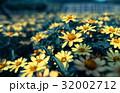 夕暮れを見つめる花たち 32002712