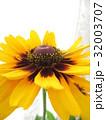 ルドベキアの花 32003707