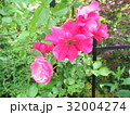 つるバラと支柱 32004274