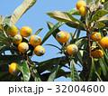 ビワ 果物 フルーツの写真 32004600