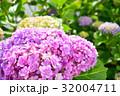 あじさい 花 春の写真 32004711