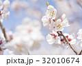 梅の花(白梅) 32010674