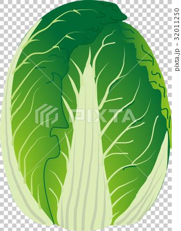 白菜 32011250