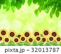 向日葵 32013787