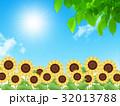 向日葵 32013788
