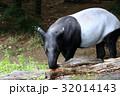 動物 哺乳類 バクの写真 32014143