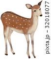 動物 哺乳類 挿し絵のイラスト 32018077