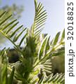 シダ 葉 自然の写真 32018825